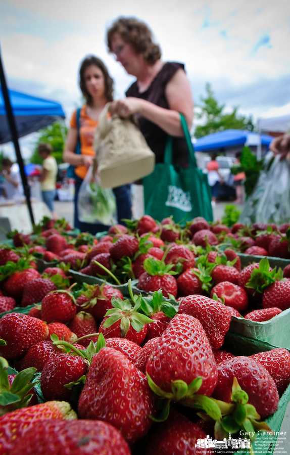 Women select tomatoes and strawberries at the Uptown Farmers Market  in Westerville, Ohio. Photo Copyright Gary Gardiner.