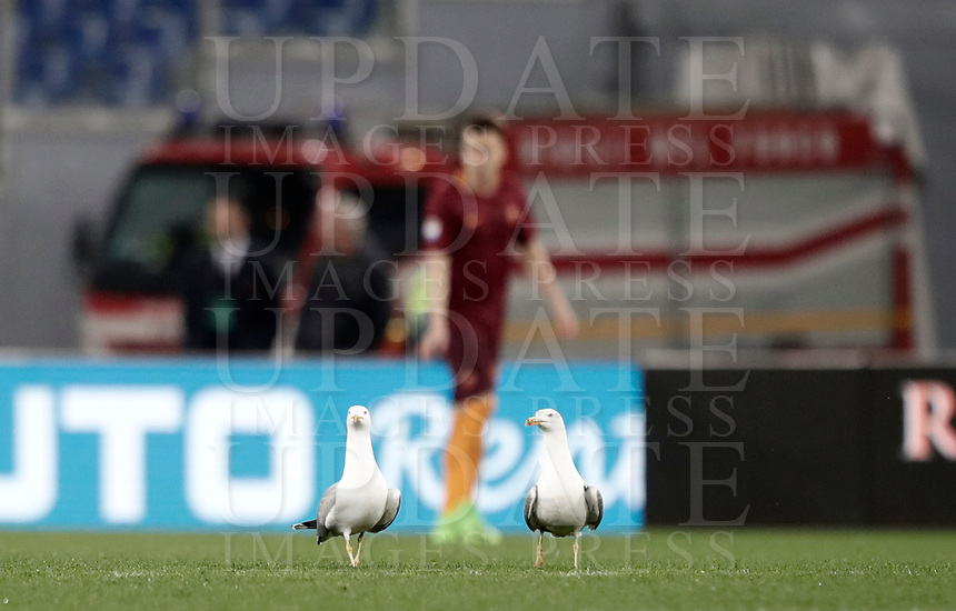 Calcio, Serie A: Roma, stadio Olimpico, 19 marzo, 2017<br /> Two seagulls walk on the pitch during the Italian Serie A football match between Roma and Sassuolo at Rome's Olympic stadium, March 19, 2017<br /> UPDATE IMAGES PRESS/Isabella Bonotto
