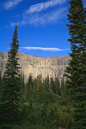 The sun spot lights the Chinese Wall between trees near Burnt Creek in the Bob Marshall Wilderness area in Montana