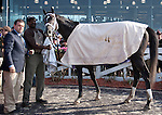 March 2010: Mission Impazible after winning the Louisiana Derby at the Fair Grounds in New Orleans, La.