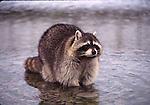 Bath Time for Wildlife