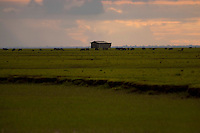 Na foz do Amazonas, fazendas com búfalos  criados em campos naturais alagados boa parte do ano, chuvas pesadas e ausência de pessoas predominam nesta região, onde o Amazonas leva sedimentos ao mar criando grandes manguezais no litoral da região. A força das águas, aliada ao fenômeno da Pororoca na foz do Amazonas, toras de madeira são jogadas na beira da vila Limão. A região das ilhas Cavianas, onde fica a vila,  é um dos últimos pedaços de terra no rio Amazonas em seu encontro com o  Atlântico.Marajó, Chaves, ilhas Caviana, Pará, Brasil.Foto: Paulo Santos17/06/2011