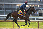 November 1, 2018: Mendelssohn, trained by Aidan P. O'Brien, exercises in preparation for the Breeders' Cup Classic at Churchill Downs on November 1, 2018 in Louisville, Kentucky. Alex Evers/Eclipse Sportswire/CSM