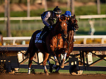 OCT 26: Breeders' Cup Dirt Mile entrant Giant Expectations, trained by Peter A. Eurton, works at Santa Anita Park in Arcadia, California on Oct 26, 2019. Evers/Eclipse Sportswire/Breeders' Cup