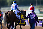 ARCADIA, CA - NOVEMBER 05: Drefong #2, ridden by Martin Garcia after winning the TwinSpires Breeders' Cup Sprint during day two of the 2016 Breeders' Cup World Championships at Santa Anita Park on November 5, 2016 in Arcadia, California. (Photo by Kaz Ishida/Eclipse Sportswire/Breeders Cup)