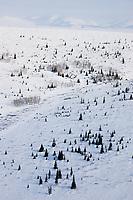 Bendeleben Mountains near Council, Alaska, on the Seward Peninsula, western Alaska.