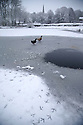 21/01/15<br /> <br /> Ducks walk on a frozen pond in Monyash, Derbyshire.<br /> <br /> More than 20 schools in Derbyshire were closed today following overnight snowfall that continued into the morning across the Peak District.<br /> <br /> All Rights Reserved - F Stop Press.  www.fstoppress.com. Tel: +44 (0)1335 300098