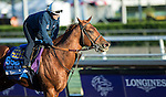ARCADIA, CA - NOV 02: Dortmund, owned by Kaleem Shah, Inc and trained by Bob Baffert, exercises in preparation for the Breeders' Cup Las Vegas Dirt Mile at Santa Anita Park on November 2, 2016 in Arcadia, California. (Photo by Kazushi Ishida/Eclipse Sportswire/Breeders' Cup)