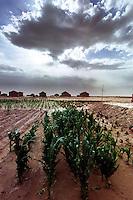 Hong Si Pu Resettlement Farmland, Zhong Ning, Ning Xia, China. Droughts and desertification are causing serious environmental problems in China...WONG  / SINOPIX