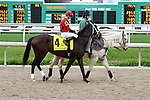 February 21, 2015: Chocolate Ride with Jesus Castanon up at the Fairgrounds Handicap at the New Orleans Fairgrounds Risen Star Stakes Day. Steve Dalmado/ESW/CSM