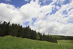 Hameginim forest in the Shephelah
