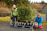 Ballinskelligs Environmental Action Group - Trees for Free with their delivery of Holly trees from Brian Shanahan in Farranfore, pictured here l-r; Sue Jackson(Chairperson) & Nyree Jones.  The Tree will be available for collection from Barbara's Café over the next few Sundays from 12-4pm.
