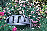 Old heirloom rose, 'Fritz Nobis' with bench, in cottage garden Credit: Michael Bates
