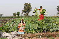 A woman works in fields on the outskirts of Kolkata.<br />