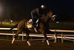 Harvest Moon, trained by trainer Simon Callaghan, exercises in preparation for the Breeders' Cup Distaff at Keeneland Racetrack in Lexington, Kentucky on November 3, 2020.