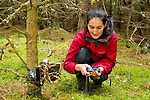 Scottish Wildcat (Felis silvestris grampia) biologist, Kerry Kilshaw, checking camera trap image to see if the camera is aligned properly on the tree, Scotland, United Kingdom