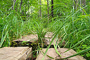 Trail Puncheons (bog bridges) located in a wet area of trail in the White Mountain National Forest USA.