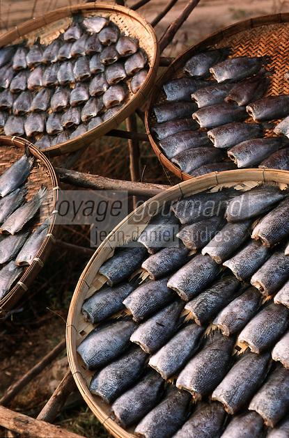 Thailande/Env de Bangkok: Etal de poissons séchés prés de Samut Songkram