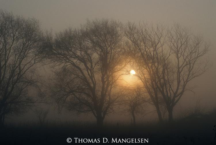 Foggy morning on the Platte River, Nebraska.