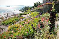 Gardens of Alcatraz within building ruins by San Fransisco Bay
