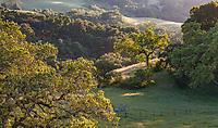 Regenerative agriculture cattle ranch using Savory Institute grazing in California Coastal Range mountains; Gabilan Ranch