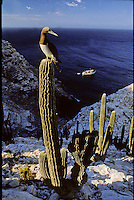 MEXICO MAINLAND & BAJA