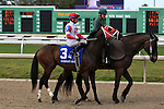 NEW ORLEANS, LA - FEBRUARY 20:<br />  International Star #3 ridden by Miguel Mena in the post parade for the Mineshaft Handicap Stakes in the Louisiana Derby Preview Race Day at Fairgrounds Race Course on February 20,2016 in New Orleans, Louisiana. (Photo by Steve Dalmado/Eclipse Sportswire/Getty Images)