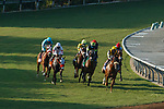 ARCADIA, CA  SEP 26:  #3 United, ridden by Flavien Prat, leads the field onto the turf track in the John Henry Turf Championship (Grade ll) on September 26, 2020 at Santa Anita Park in Arcadia, CA.  (Photo by Casey Phillips/Eclipse Sportswire/CSM.