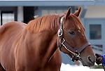 17 January 2010.   Kentucky Stallion Farms.  Street Boss at Darley @ Jonabell.