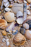 shells on Shell Beach on island, Ria Formasa Preserve, Faro, Portugal