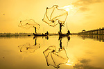 Pictured:  Fun golden glow at sunrise.<br /> <br /> Fishermen fling their nets wide as they scour the water for fish at sunrise.  The sun cast the scene in a golden glow as the men began work in the early morning.<br /> <br /> Reflections of the large nets shimmered in the lake as the fishermen waited for shoals of fish swimming close to U Bein Bridge, near Amarapura, Myanmar.  SEE OUR COPY FOR DETAILS.<br /> <br /> Please byline: Zay Yar Lin/Solent News<br /> <br /> © Zay Yar Lin/Solent News & Photo Agency<br /> UK +44 (0) 2380 458800