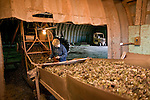 Carol Ann Doucette sorts the Irish Moss before it gets baled at Shea's Irish Moss plant in North Anglo, Prince Edward Island.