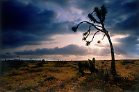 Dark clouds appear ominous, but hold the promis of much needed moisture in the arid lands of Baja California