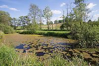 Tümpel, Teich, Hamfelder Hof, Schleswig-Holstein. Pool, pond