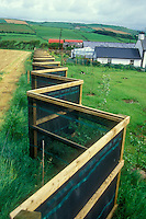 Garden windbreak newly installed at Joy Larkcom's Irish farm