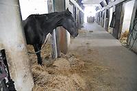 - horse farm in the province of Piacenza....- allevamento di cavalli in provincia di Piacenza