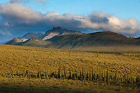 Tundra and taiga and the Alaska Range mountains in the distance, Denali National Park, Interior, Alaska.