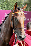October 02, 2016, Chantilly, FRANCE -  National Defense after winning the Qatar Prix Jean-Luc Lagardere (Grand Criterium) (Gr. I) at  Chantilly Race Course  [Copyright (c) Sandra Scherning/Eclipse Sportswire)