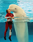 """April 26, 2017, Yokohama, Japan - Kanako Momota, a member of Japanese girls only pop group """"Momoiro Clover Z"""" (MCZ) gets a kiss from a white beluga at the aquarium of the Hakkeijima Sea Paradise in Yokohama, suburban Tokyo on Wednesday, April 26, 2017. The aquarium will start the new attraction with sea aninals featuring a MCZ's TV program for children from April 28.   (Photo by Yoshio Tsunoda/AFLO) LwX -ytd-"""
