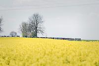 peloton on it's way to Huy<br /> <br /> 81st La Flèche Wallonne (1.UWT)<br /> One Day Race: Binche › Huy (200.5km)