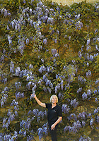 """BNPS.co.uk (01202 558833)<br /> Pic: ZacharyCulpin/BNPS<br /> <br /> Blenheim in bloom...<br /> <br /> Head Gardener Hilary Wood with the wonderful wisteria behind one of the many ornate stautes in the gardens. """"The wisteria is such a beautiful plant and this particular variety with its purple blue shade is definitely one of my favourites.""""It blooms throughout May and June and careful pruning is essential""""<br /> <br /> One of Britain's most historic stately homes is expecting a bumper year for its stunning roses with some already in full bloom.<br /> <br /> Blenheim Palace, the birthplace of Sir Winston Churchill, is currently closed to visitors due to the coronavirus pandemic so this might be the only chance to see some of their stunning floral displays.<br /> <br /> With a reduced team of gardeners tending to the formal gardens and 2,000 acres of Capability Brown-landscaped parkland, there is little time for staff to stop and smell the roses.<br /> <br /> But if they could there is a spectacular climbing rose called Dreaming Spires, which grows up the walls of the Palace's orangery, that is already in full bloom and its 'wonderwall' of wisteria is also looking incredible."""