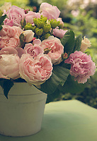 A pot of pink roses on an outdoor table