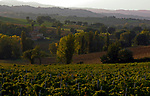 Italien, Umbrien, Landschaft bei Foligno - Weinanbau | Italy, Umbria, landscape near Foligno - wine growing