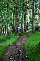 Northumberland,  England, UK.  Forest on Hadrian's Wall (Pennine Way) Footpath by Hotbank Crags.