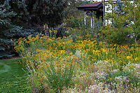 Prairie meadow lawn replacement with native grasses and flowering perennials, Denver Botanic Garden, Chatfield