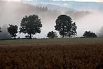 Europa, DEU, Deutschland, Hessen, Landkreis Fulda, Luedermuend, Abendstimmung, Nebel im Fuldatal, Dunst, Baeume, Typische Landschaft, Kategorien und Themen, Natur, Umwelt, Landschaft, Jahreszeiten, Stimmungen, Landschaftsfotografie, Landschaften, Landschaftsphoto, Landschaftsphotographie, Wetter, Wetterelemente, Wetterlage, Wetterkunde, Witterung, Witterungsbedingungen, Wettererscheinungen, Meteorologie, Wettervorhersage<br /> <br /> [Fuer die Nutzung gelten die jeweils gueltigen Allgemeinen Liefer-und Geschaeftsbedingungen. Nutzung nur gegen Verwendungsmeldung und Nachweis. Download der AGB unter http://www.image-box.com oder werden auf Anfrage zugesendet. Freigabe ist vorher erforderlich. Jede Nutzung des Fotos ist honorarpflichtig gemaess derzeit gueltiger MFM Liste - Kontakt, Uwe Schmid-Fotografie, Duisburg, Tel. (+49).2065.677997, ..archiv@image-box.com, www.image-box.com]