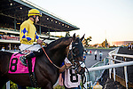 Brother Soldier ridden by Edwin Maldenado at the Cash Call Futurity on December 14, 2013 at Betfair Hollywood Park in Inglewood, California .(Alex Evers/ Eclipse Sportswire)