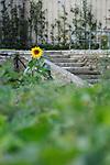POTAGER DU ROI..Cadre : Plastique Danse Flore..Lieu: Le potager du roi..Ville : Versailles..le 18/09/2011..© Laurent Paillier / photosdedanse.com..All rights reserved
