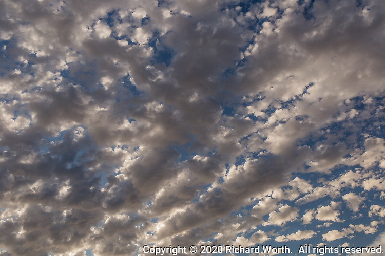 An hour before sunset altocumulus clouds fill the sky, floating in from the west - precursors of rain.