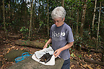 Jenny Mclean on site of a fruitbat or spectacled flying fox (Pteropus conspicillatus) colony to save surviving fruit bats bitten by paralytic ticks. Paralysis tick of Australia (Ixodes holocyclus)